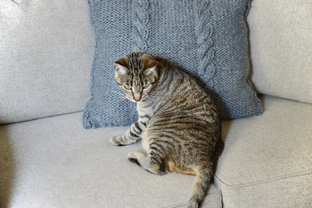 cat on chunky knit pillow